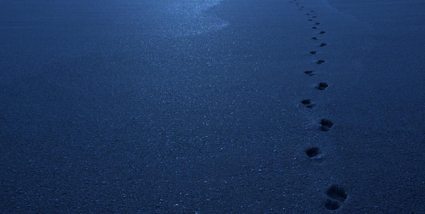 Blue Footsteps